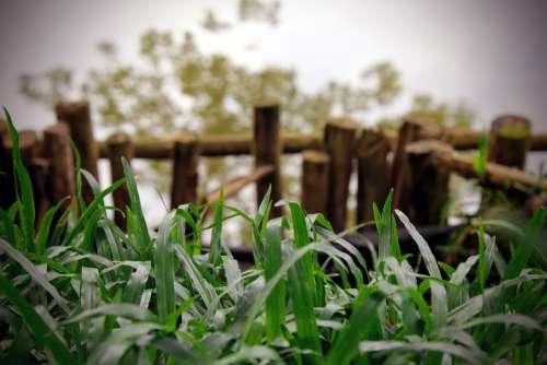 Grass Nature Green Water Outdoors