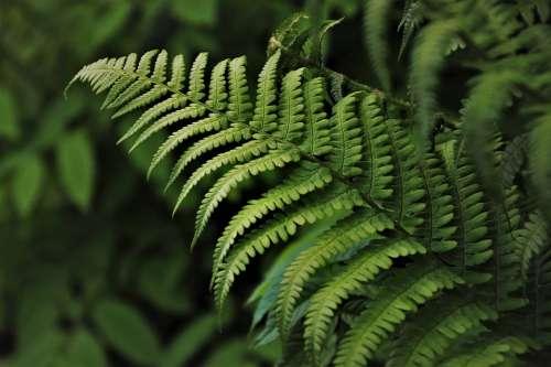 Grow Green Ferns Flora Growth Plant Botany