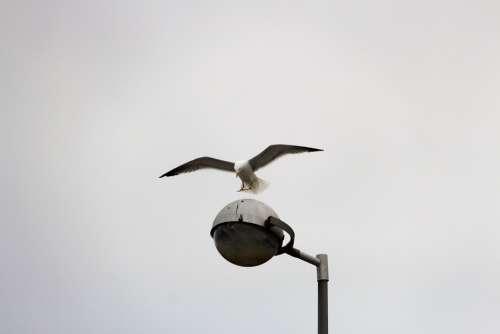 Gull Flight Gulls Floor Lamp Bird