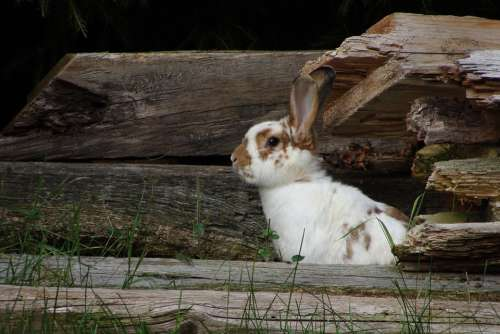 Hare Cute Rabbit Nature Grass Pet Animal World