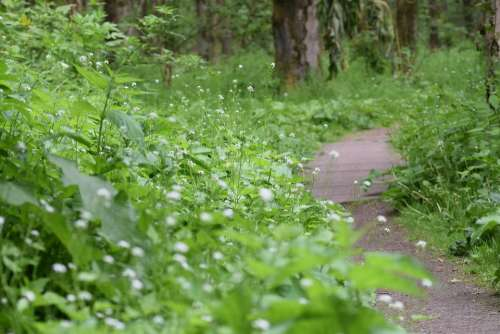 Hiking Walk Forest Path Landscape Nature