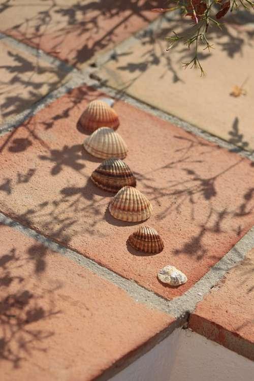 Hiszpania Muszla Lato Spain Shells Summer Nature