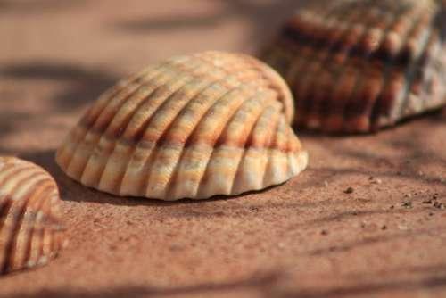 Hiszpania Muszla Lato Spain Shells Summer