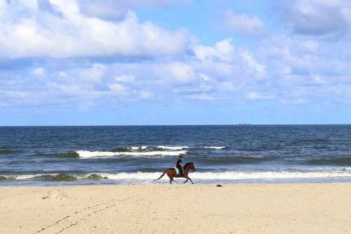 Horse Langeoog Nature Blue Scenic Summer Clouds