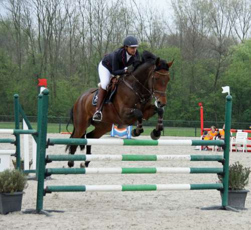 Horseback Riding Jump Obstacle Contest Sports