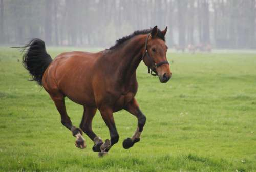 Horses Whey Gallop Animals Meadow Pasture Grass