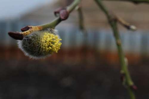 Весна Верба Spring Verba Nature Botany Branches