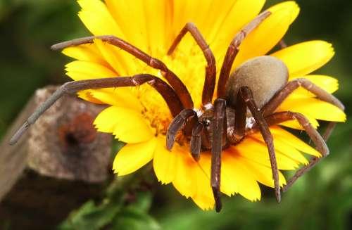 Insect Predator Spider Arthropod Colombia