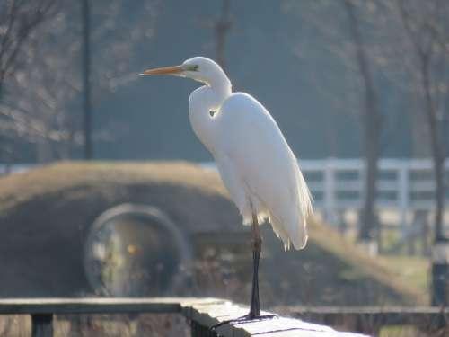 Japan Natural Landscape Animal Park Morning