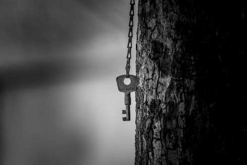 Key Tree Metal Bokeh Focus