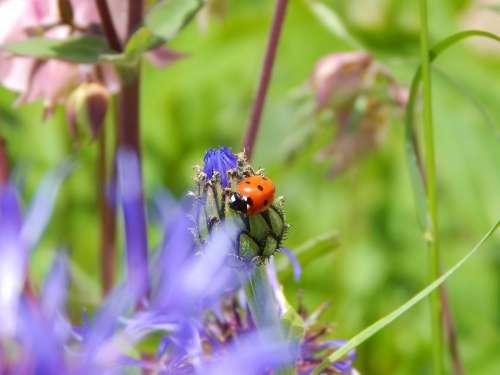 Ladybug Luck Garden Nature Siebenpunkt