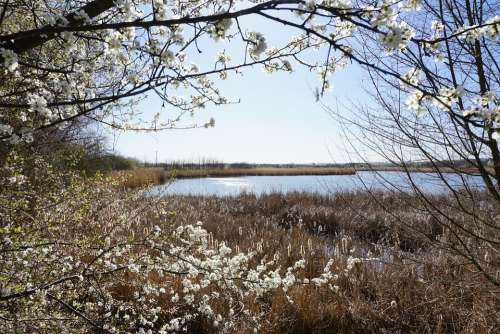 Lake Vacations Sky Water Flowers Spring Nature