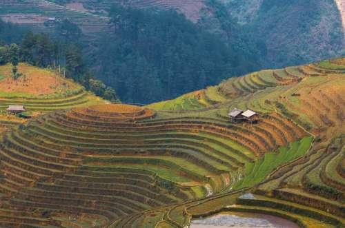 Landscape Terraces Rice Field La Pan Tan