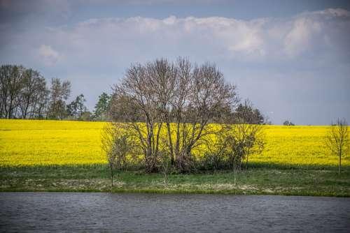 Landscape Sky Nature Scenic Field Yellow Rape