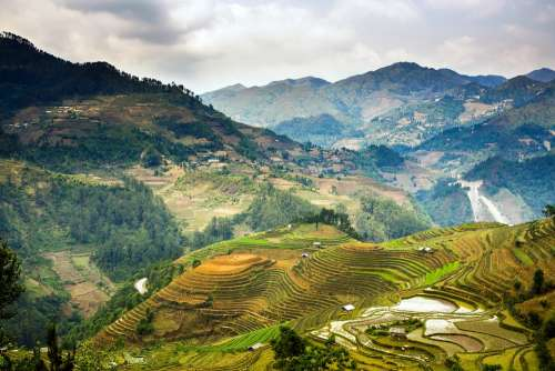 Landscape Terraces Rice Field Jasmine Vietnam
