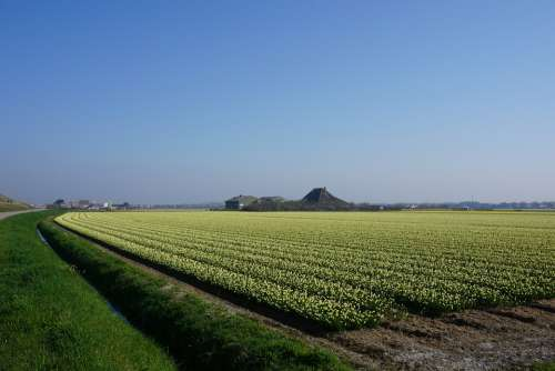 Landscape North Of The Netherlands Plants Horizon