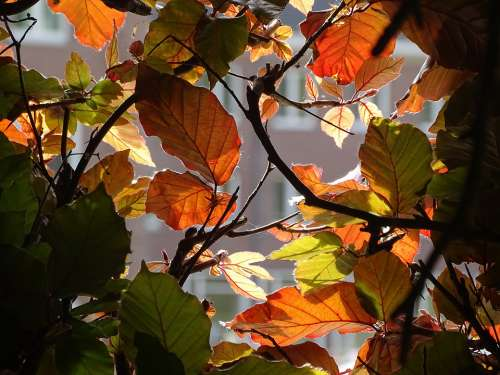 Leaves Brightness Beech Spring Nature Crossing