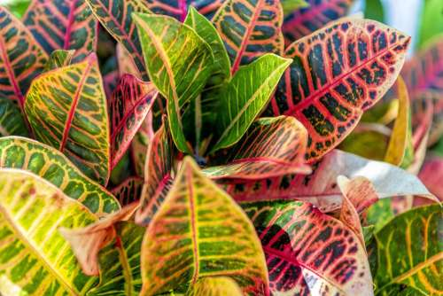 Leaves Color Plant Colorful Garden