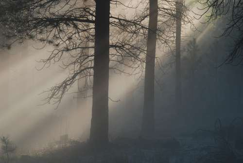 Light Mist Fog Forest Mystery Haze Suns Rays