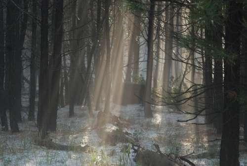 Light Fog Forest Mist Rays Mystical