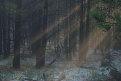 Light Rays Sunlight Trees Forest Mist Fog Hope