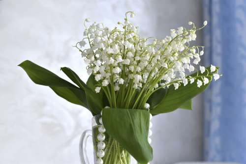 Lilies Of The Valley Flowers Spring Bouquet