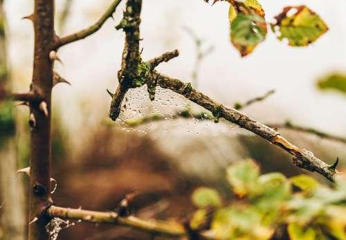 Macro Detail Drops Web Autumn Tree
