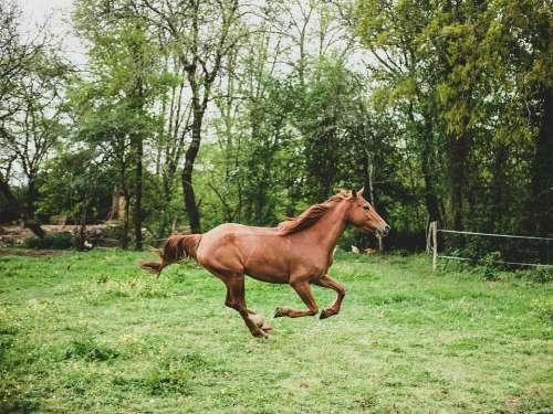 Mare Horse Prairie Nature Horseback Riding Animals