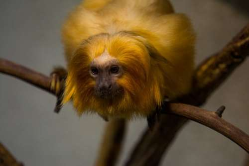 Monkey Zoo Animal Mammal Animal World Portrait