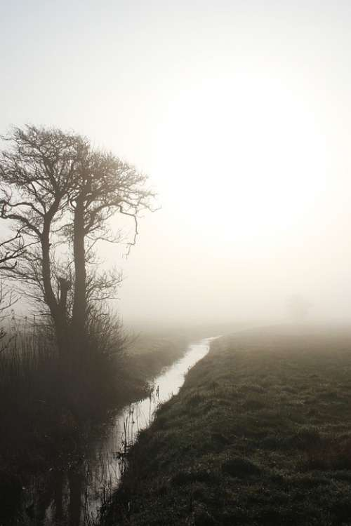 Natural Streams Wood Fog Dis Sunrise Landscape