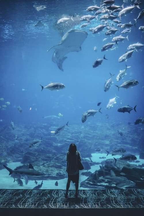 Nature Water People Woman Fish Blue Wonder Alone