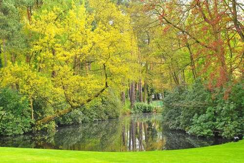 Nature Plant Green Lake Garden Belgium Natural