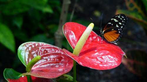 Nature Flower Butterfly Plant Biosphere Insect