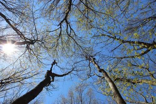Nature Tree Sky Sun Perspective Forest Idyllic