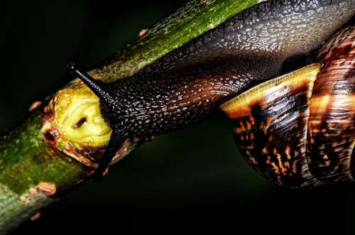 Nature Snail Shell Mollusk Slowly
