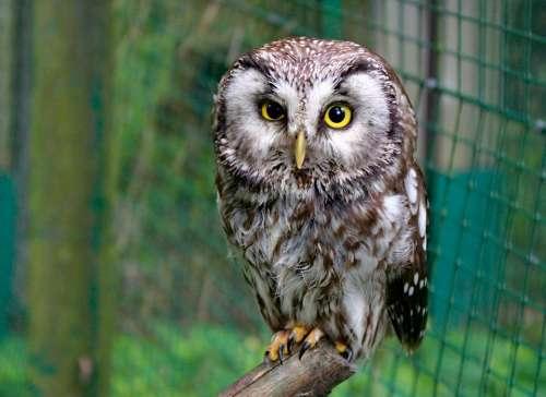 Owl Tawny Owl Bird Animal Night Cub Zoo Cage