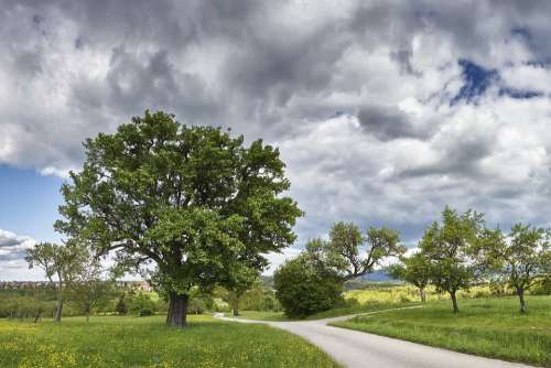 Panorama Tree Spring Landscape Nature Sky Clouds