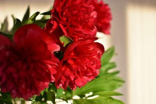 Peony Spring Flowers Bouquet