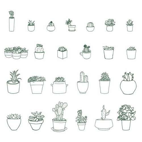 Plant Nature Pot Potted Succulent Cactus Cacti
