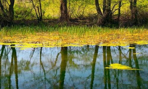 Pond Lake The Water Mirroring