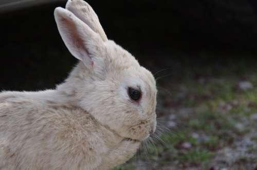 Rabbit Hare Natural Wild Animals Wild Rabbit