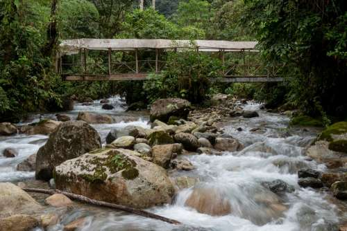 Rainforest Bridge River Water Nature