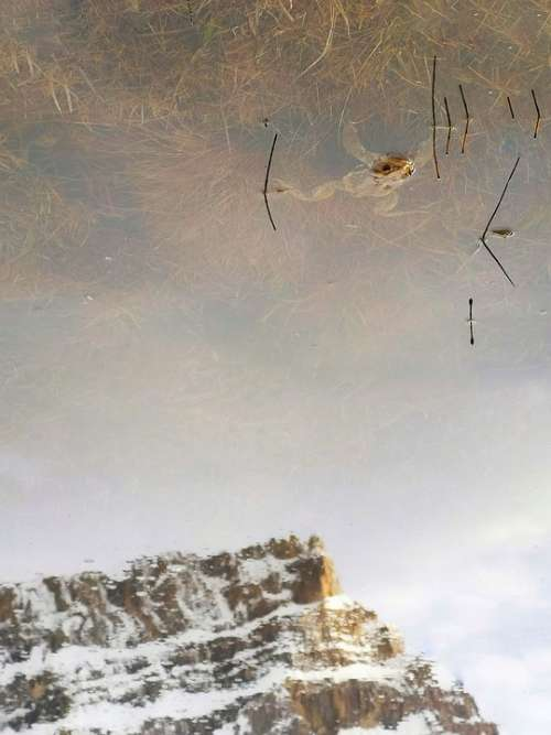Rana Lake Mirrored Odles Doleda Dolomites Water