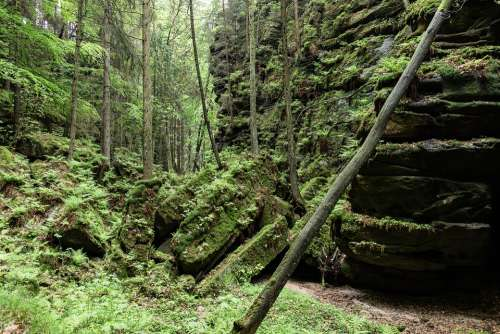 Rock Landscape Gorge Mood Forest Schroff