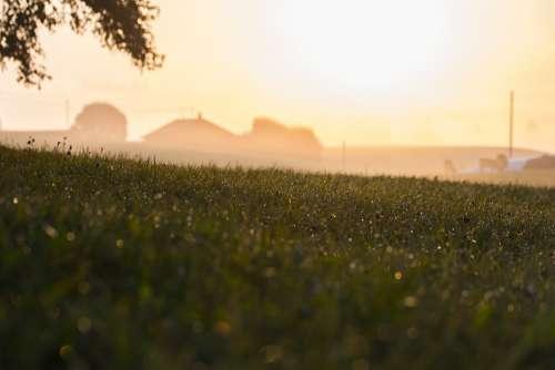 Rural Morning Field Grass Tree Dew Drops Farmer