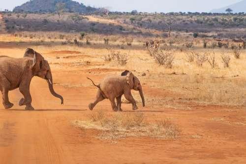 Safari Elephant Landscape Nature Africa Savannah