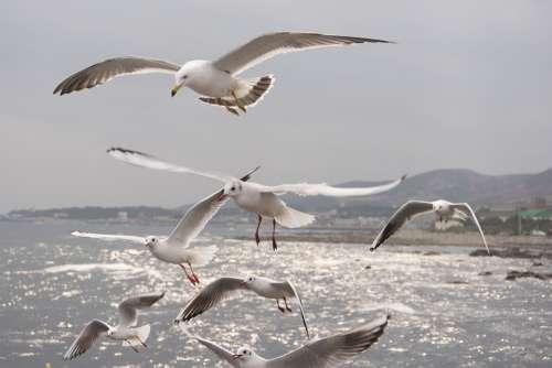 Seagull Sea Birds Flight Wing Freedom Water