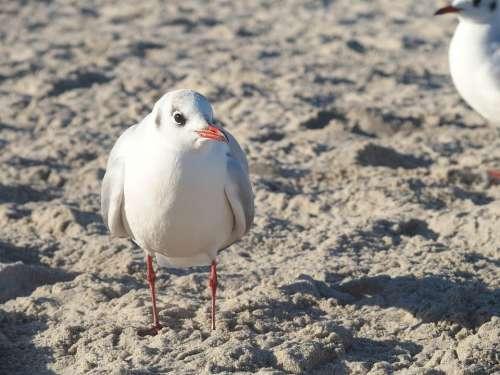 Seagull Sea Baltic Sea Water Bird Nature Animal