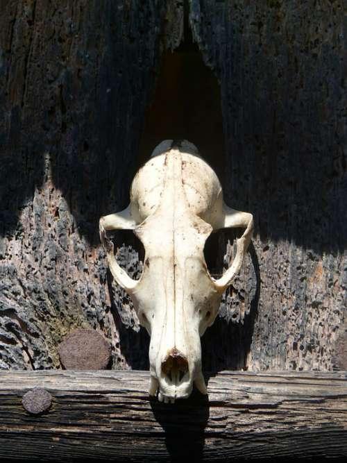 Skull Skull Of Goat Death Door Abandoned Terror