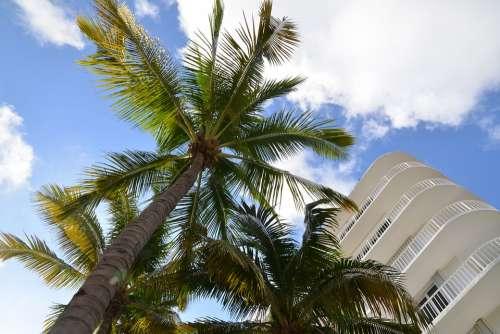 Sky Clouds Palm Trees White Building Landscape